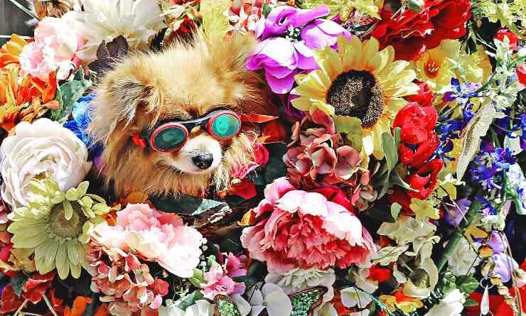 cane immerso nei fiori
