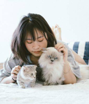 Perchè il gatto strofina la sua faccia sulla nostra?