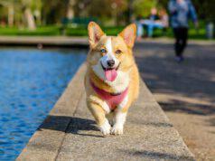 Come gestire il cane capriccioso in vacanza