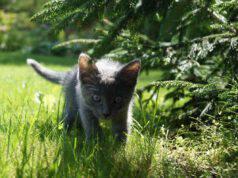 Salvaguardare il gatto dai pericoli estivi