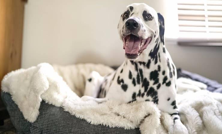 cane giocoso nella sua cuccia