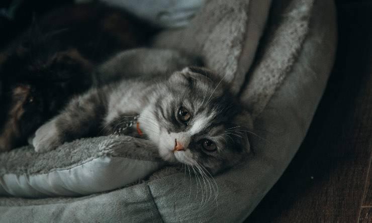 gatto apatico