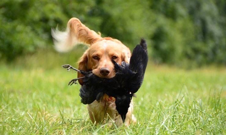 cane con preda