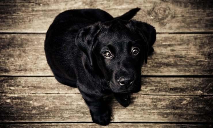cane figlia