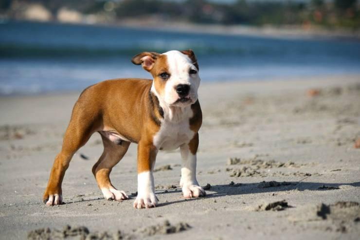 smarrisce cane vacanza