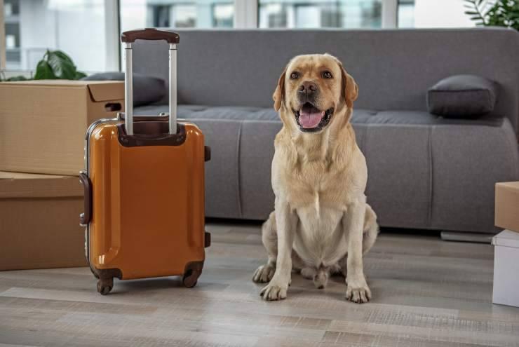 rientro dalle vacanze per il cane