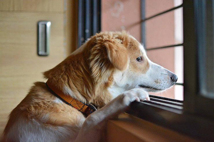 cane triste finestra