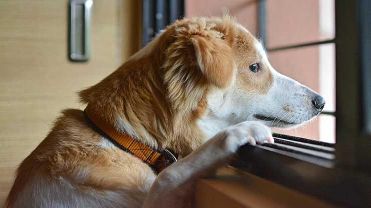 Il cane solo (Foto Pixabay)
