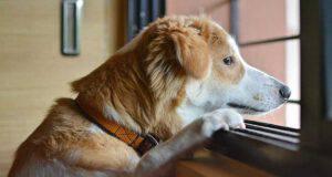 Il cane alla finestra (Foto Pixabay)