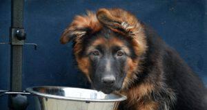 cane mangia ciotola