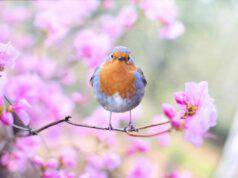 L'uccellino sul ramo (foto Pixabay)