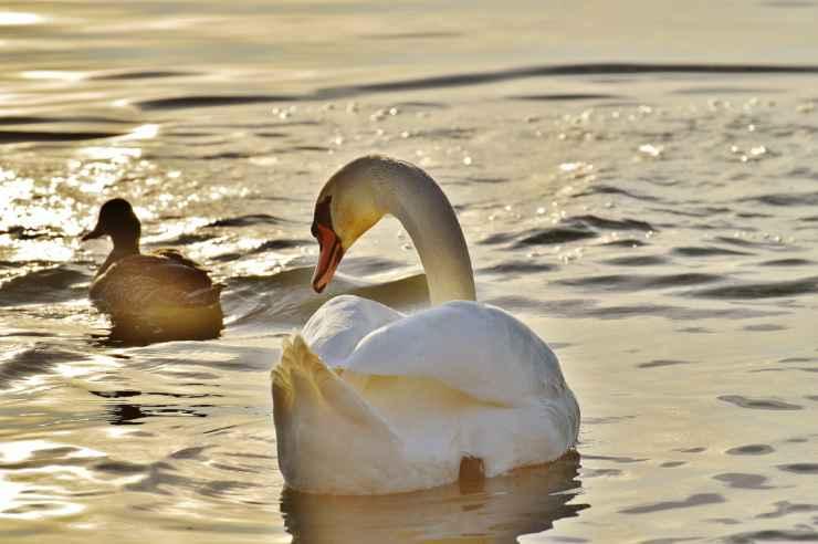 Gli animali del lago (Foto Pixabay)