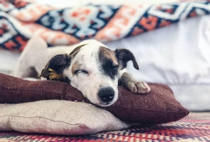 cane che riposa nella cuccia