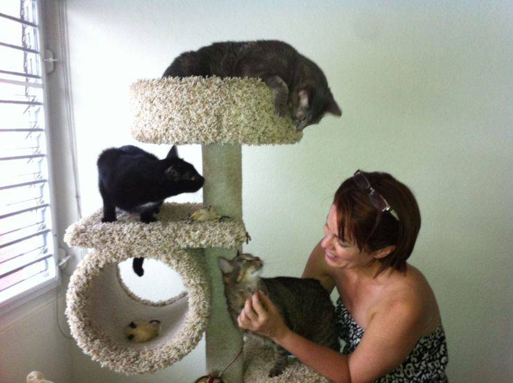 casa gatti pulita