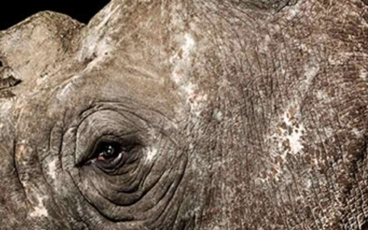 munu rinoceronte