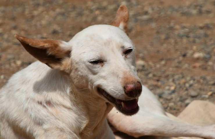 Uno dei cani del rifugio (Foto Facebook)