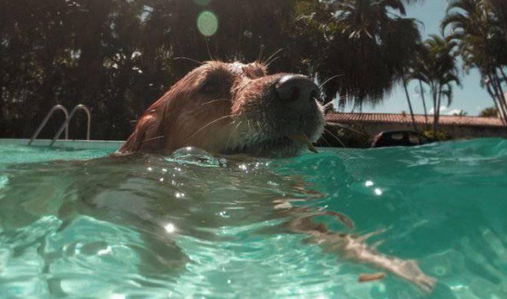 cane salvato fattorino amazon