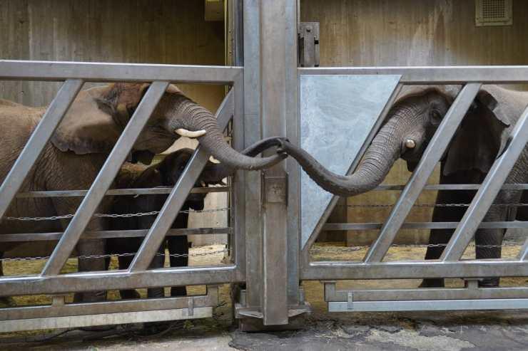 mamma elefante figlia nipoti