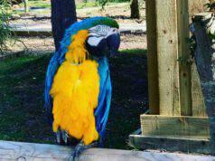 Uno dei pappagalli dello zoo (Foto Facebook)