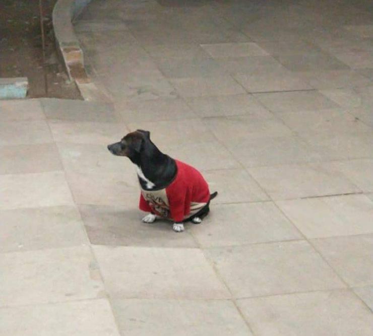 cane aspetta proprietario ospedale