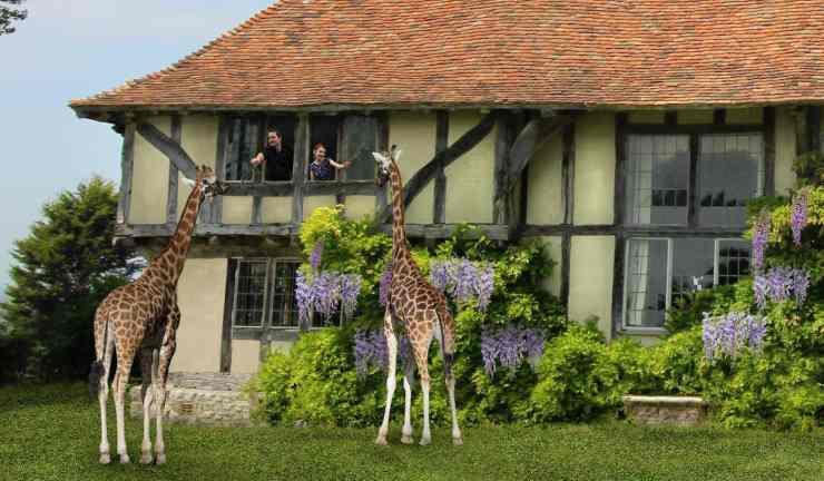 Le giraffe con gli ospiti (Foto Facebook)