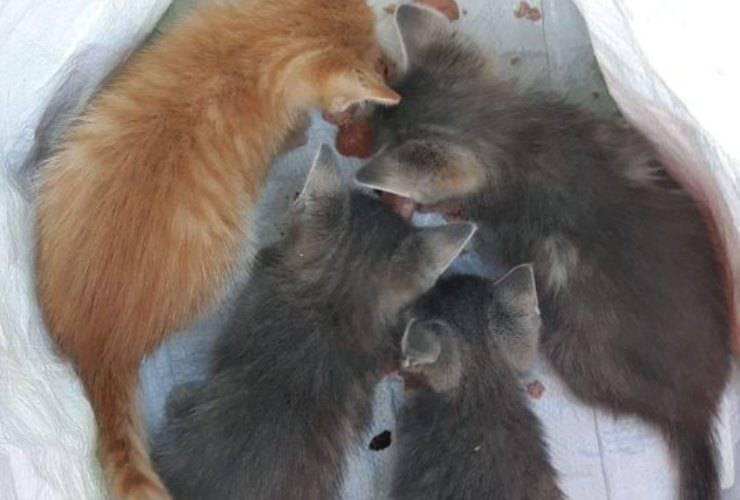 parma gattini gettati spazzatura