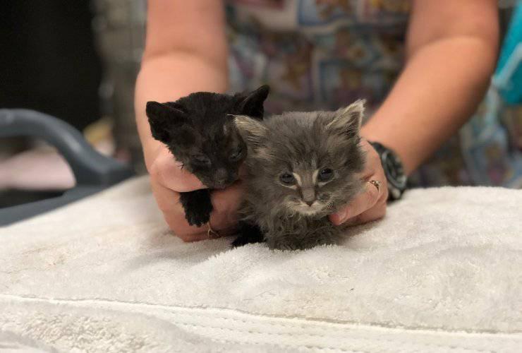 incendi oregon gatti salvati