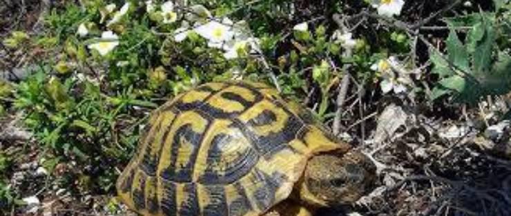 tartarughe salvate polizia