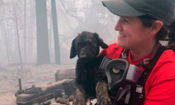 incendi california cane salvato