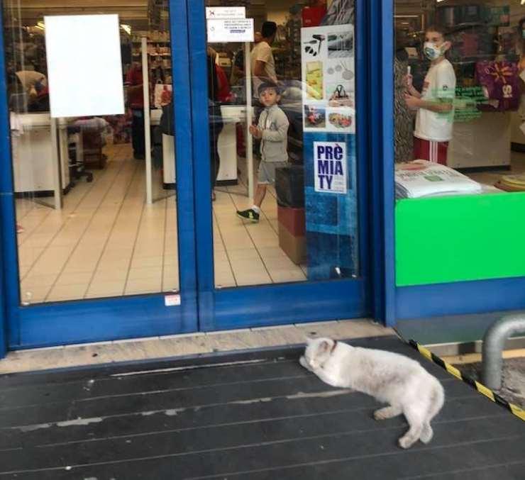 gatta aspetta padrona supermercato