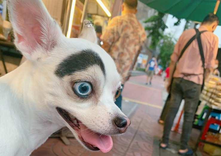 """Il cane """"dipinto"""" (Foto Facebook)"""