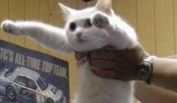 morto nobiko gatto lungo
