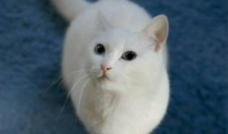 nobiko gatto lungo morto