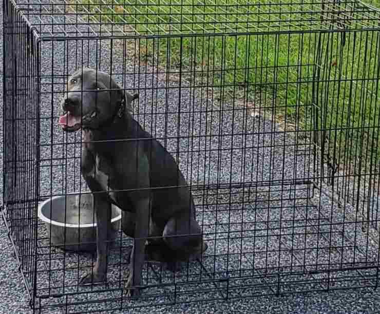 cane abbandonato rifugio gabbia