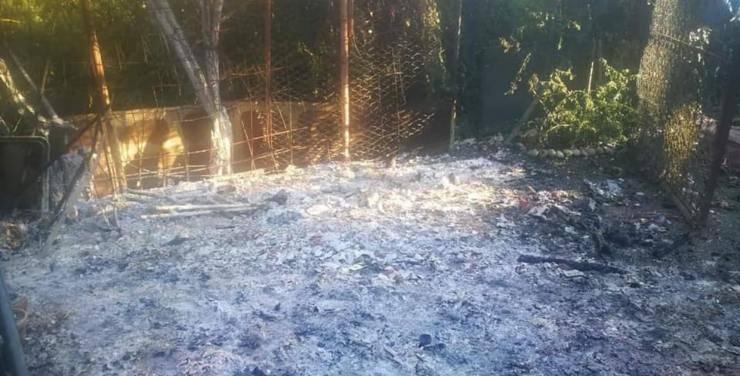 colonia felina bruciata milano