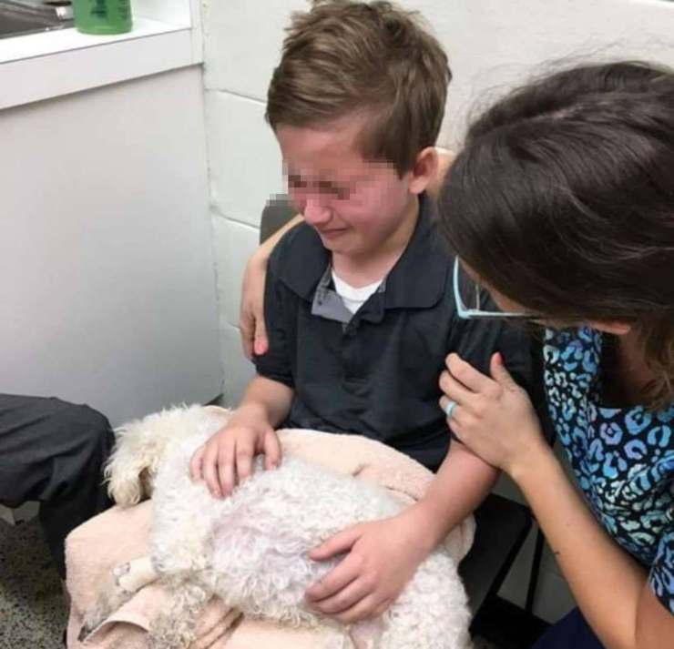 ragazzo assiste cane