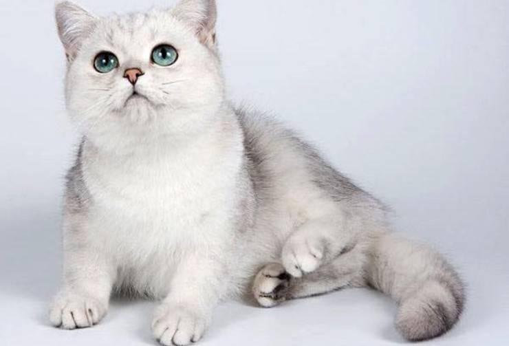 gatti autismo bambini