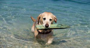 spiagge libere maccarese