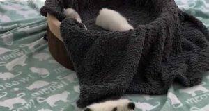 Il micio alle prese con i passi (Foto video)