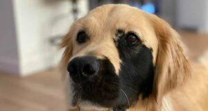 Il cane con la macchia (Foto Instagram)