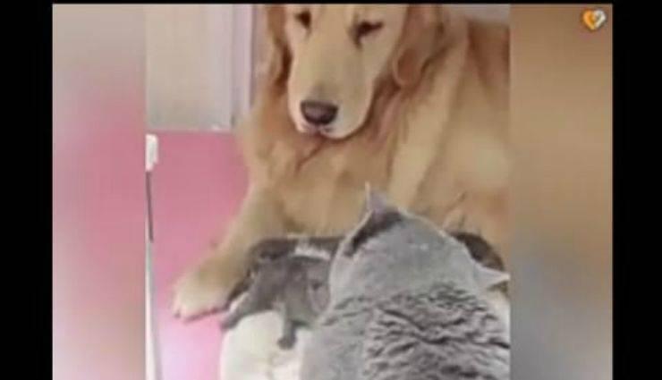 il cane e i gatti (Foto video)