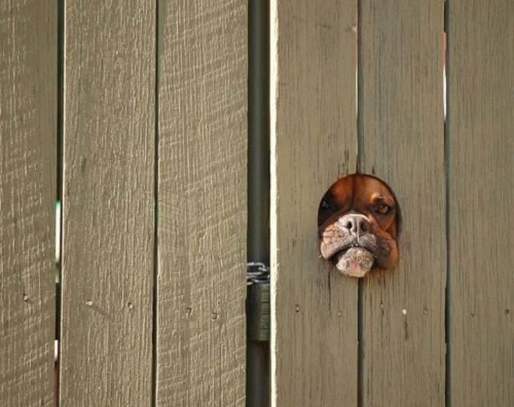 cane guardia porta