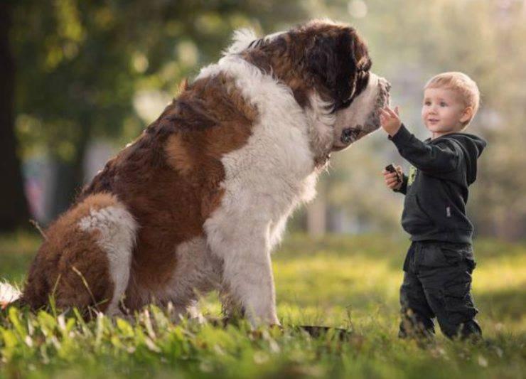 cane san bernardo e bambino
