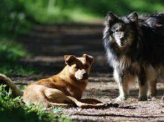 mazara cani randagi