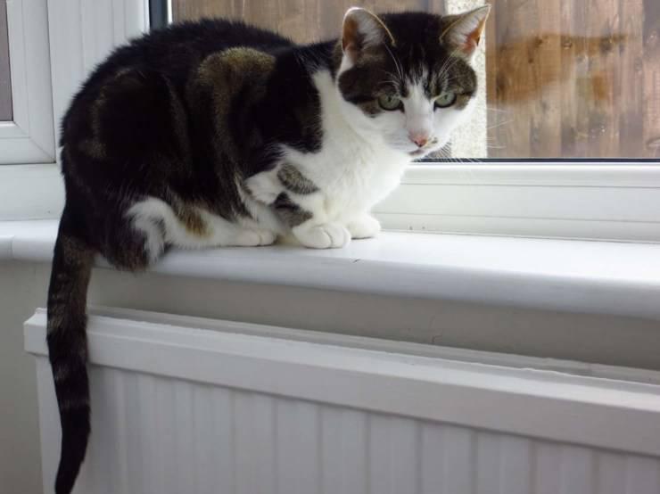 gatto triste finestra