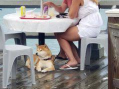 cane sotto tavolo