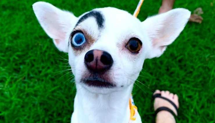 Il cane con un sopracciglio (Foto Facebook)