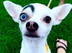 Il cane Lucky (Foto Facebook)