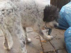 cane lipari intrappolato salvato