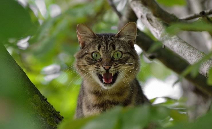gatto paura delle forbici